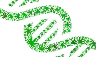 Cannabis DNA Tests